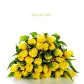 Tulipanes amarillos — Foto de Stock