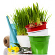 Spring flowers and garden tools — Stok fotoğraf