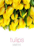 Yellow tulips — Stock Photo