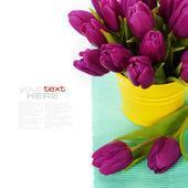 Spring tulips — Stok fotoğraf