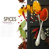 Spices border.Isolated on white — Stock Photo