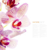 Blooming orchid — Stock Photo