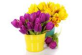 Spring tulips — Zdjęcie stockowe