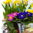 Stock Photo: Spring flowers and garden tools