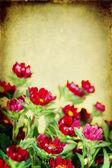 κόκκινα λουλούδια — Φωτογραφία Αρχείου