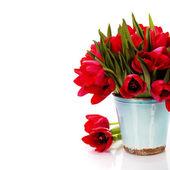 Tulipanes rojos — Foto de Stock