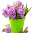 Beautiful Hyacinths and garden tools — Stock Photo