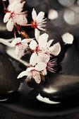 Zen pebbles with spring tree — Stock Photo
