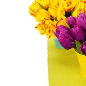 Voorjaar tulpen — Stockfoto