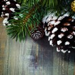 Christmas tree and cones — Stockfoto