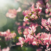 spring blossoming tree — Stock Photo