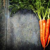 Fresh carrots — Stock Photo