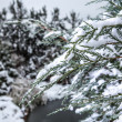 Winter branch covered with snow - Stock Photo