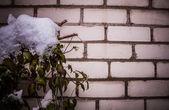 Muur en besneeuwde bush — Stockfoto