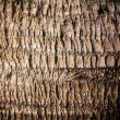 Old Wooden Background. — Stock Photo #23378728