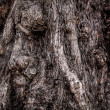 Big tree root. Close-up texture. - Stock Photo