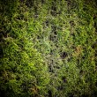 Stock Photo: Green grass background.
