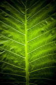 Green leaf background texture. — Stock Photo