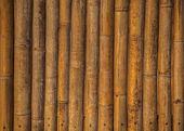 Bamboo background. — Stock Photo