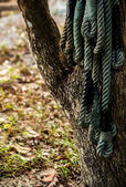 Quadro de corda na árvore — Foto Stock