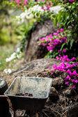 コテージ ガーデン — ストック写真