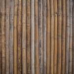 Bamboo background. — Stock Photo