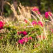 Stock Photo: Flower garden background