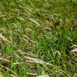 Royalty-Free Stock Photo: Fresh green grass background