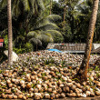 Stock Photo: Field of coconut trees