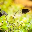 Black butterflies — Stockfoto