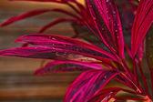 Blumengarten-hintergrund — Stockfoto