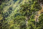 茂みの中で緑の小さな植物の背景写真 — ストック写真