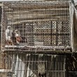 Birds in cage - Foto Stock