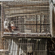 Birds in cage - Stockfoto
