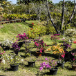 Garden scenery - Stock Photo