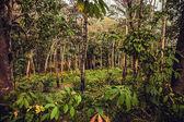 ヤシの木の森 — ストック写真