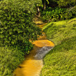 Tropical river, jungle on both shores - Stock Photo