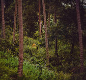 Palms forest — Stock Photo