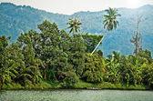тропическая река — Стоковое фото
