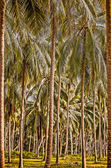 Floresta de palmeiras — Foto Stock