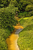 Tropical river, jungle on both shores — Stock Photo