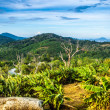 Amazing tropical landscape — Stock Photo #27435449