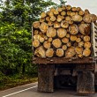 Truck transporting timber — Stock Photo #46669817