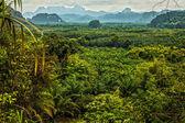 Thailand rain forest landscape — Stock Photo
