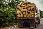 Truck transporting timber — Stock Photo