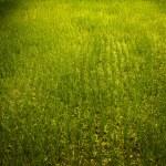 Rice field. — Stock Photo #8995210