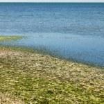 Beach with seaweed — Stock Photo #13374940