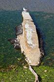 Seagull on quay — Stock Photo
