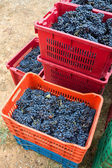 Crates full of grapes — Stockfoto