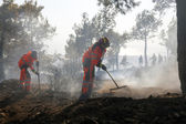 Low scale fire at a Seich Sou forest - Thessaloniki, Greece — Stock Photo